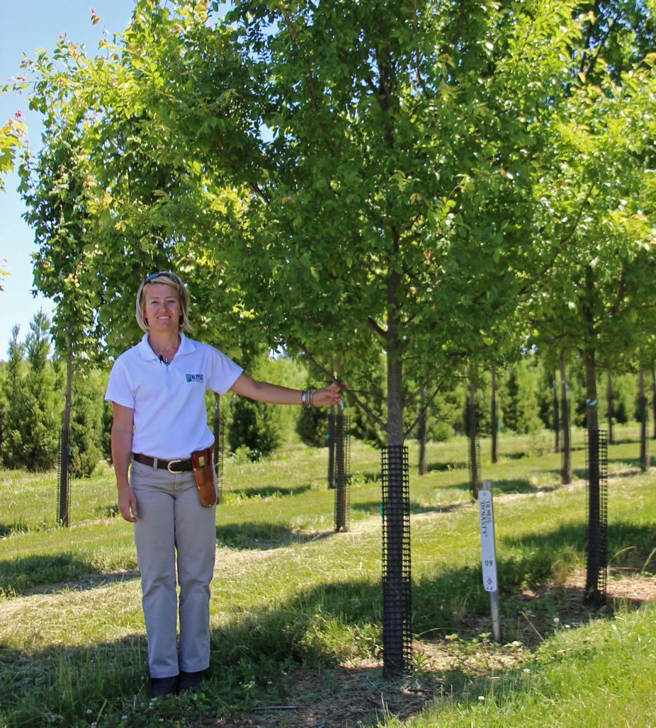 Three Favorite Northern Virginia Shade Trees Surrounds