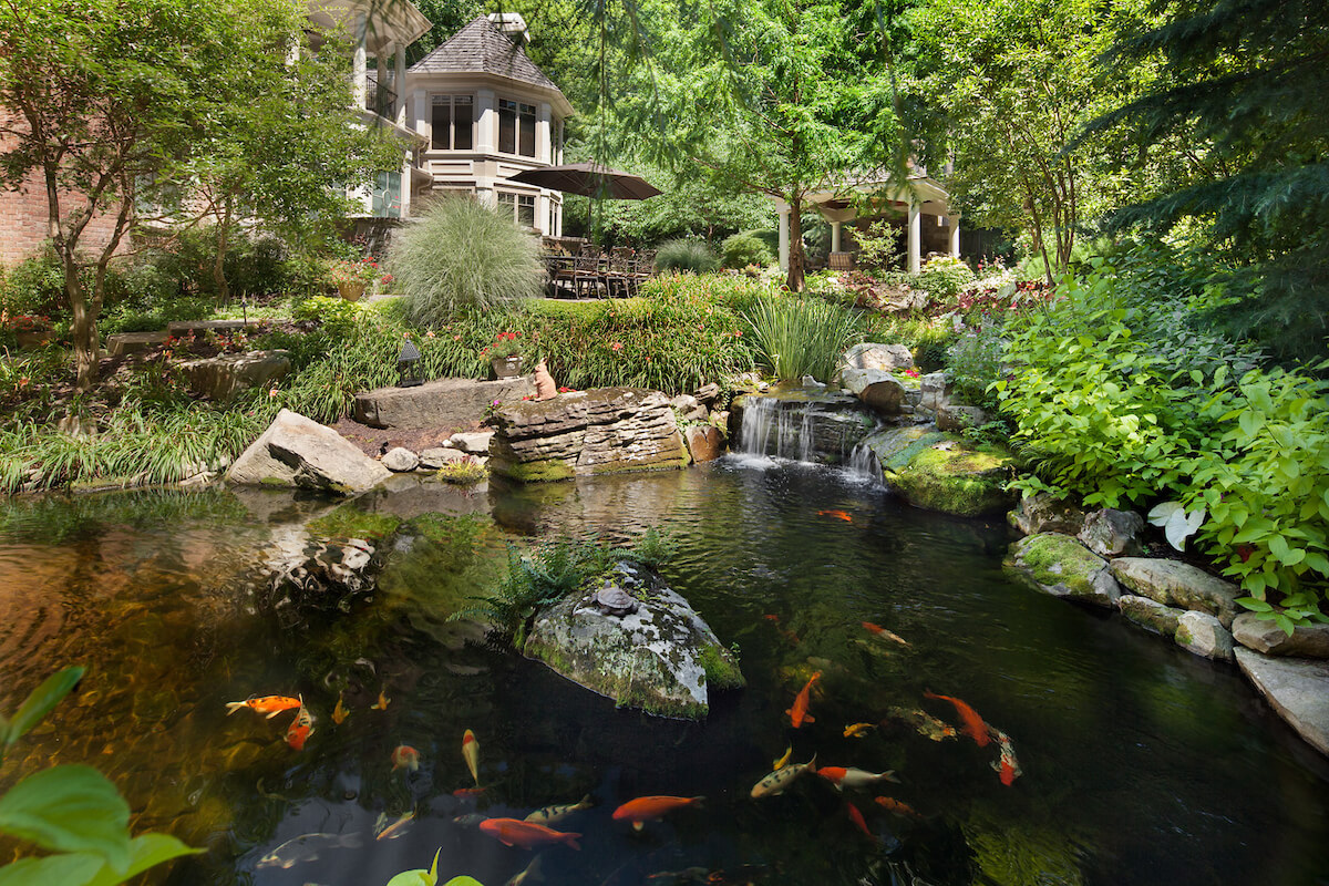 naturalistic Backyard Koi Pond