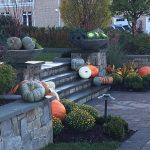 autumn seasonal display & annual beds