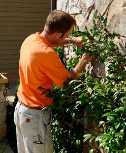 garden care technician-pruning espalier