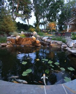 garden koi pond with waterfall