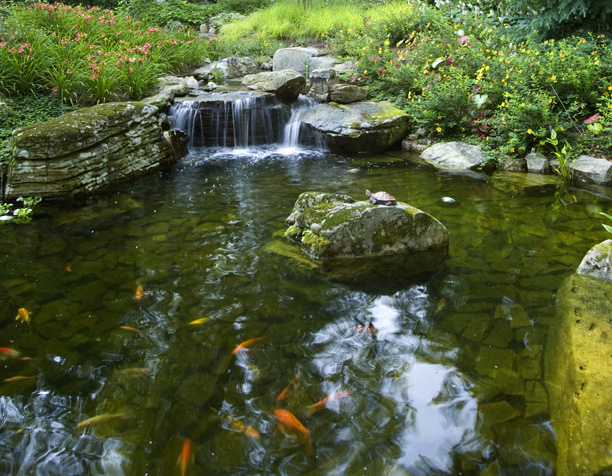koi pond & waterfall