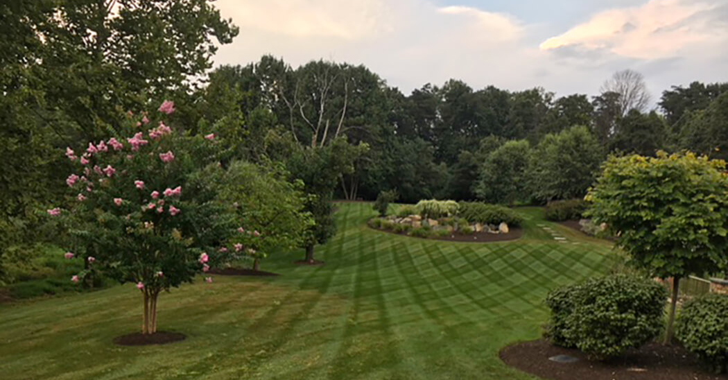 lawn care-expansive backyard