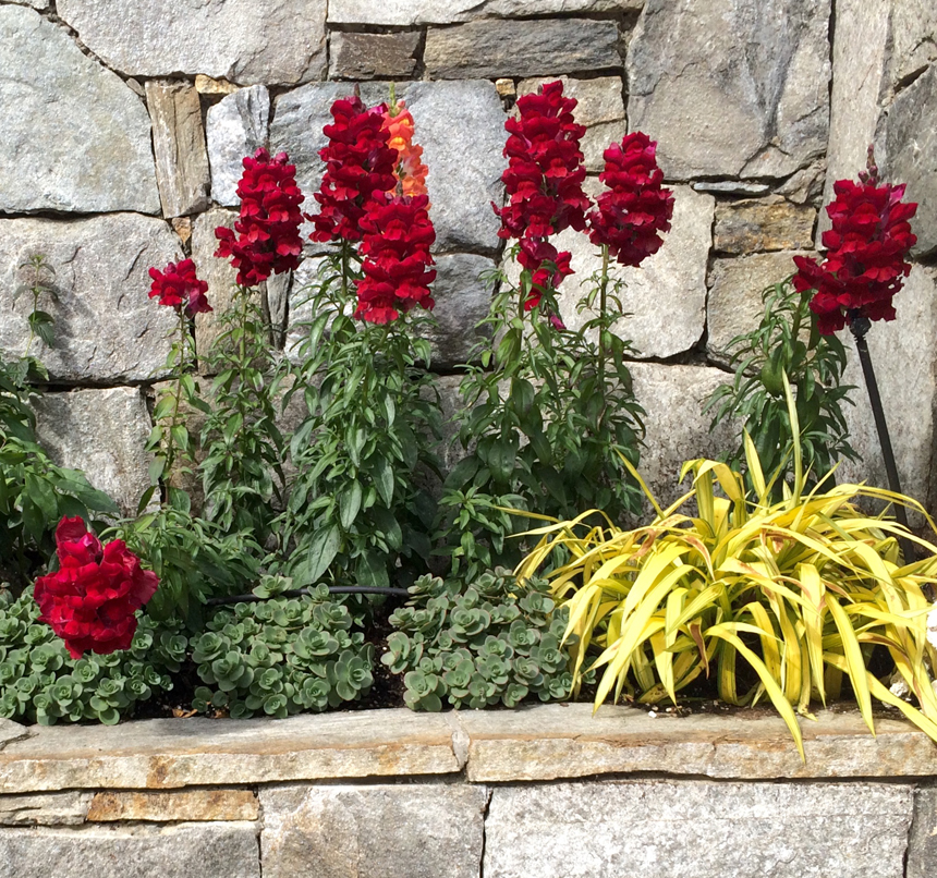 annuals in stone retaining wall planter