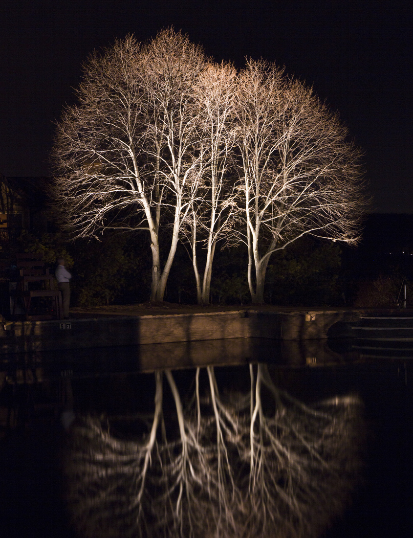 outdoor lighting on tree reflecting in pond