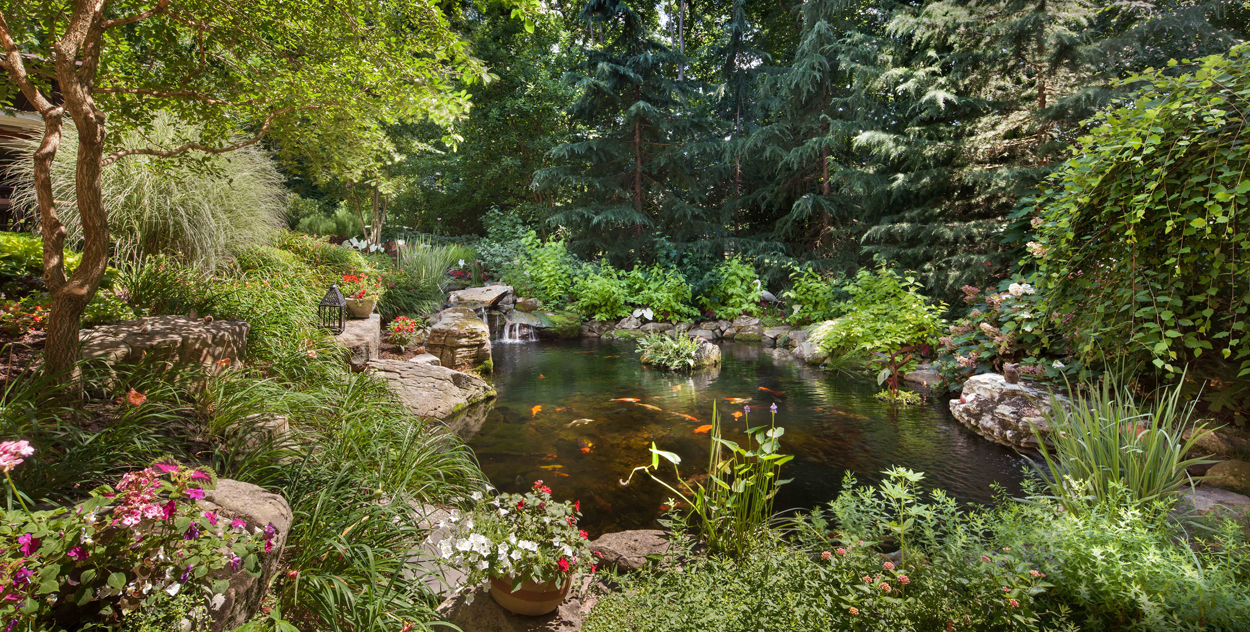 garden pond in woodland setting