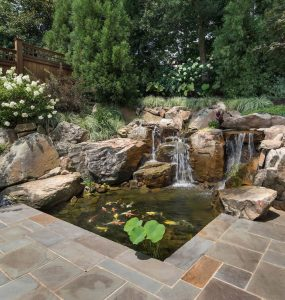 small garden pond with aquatic plants