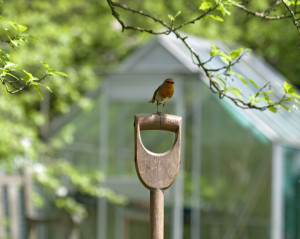 bird on a shovel hand by Cath Dorset