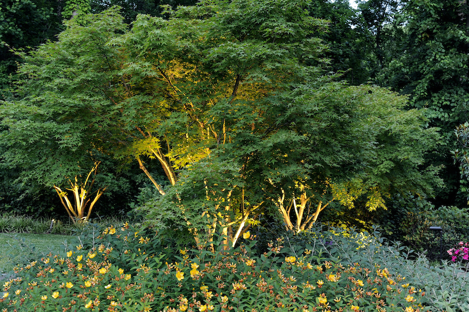 landscaping vignette japanese maples