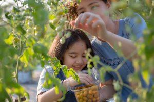 mom & daughter pick tomatoes in backyard garden