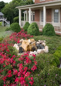 hand pruned front yard landscaping