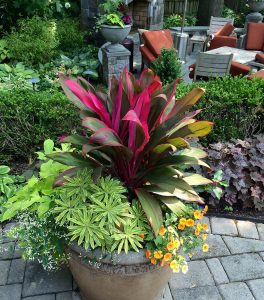 patio container summer annuals display