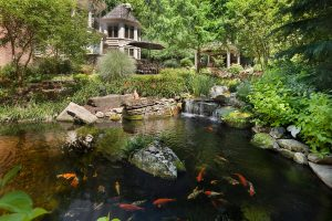 perennial shade plants and pond