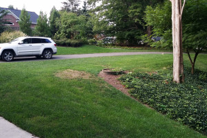 front yard BEFORE landscaping