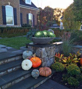 blue-pumpkins-ornamental-cabbage