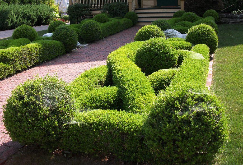 boxwood knot garden