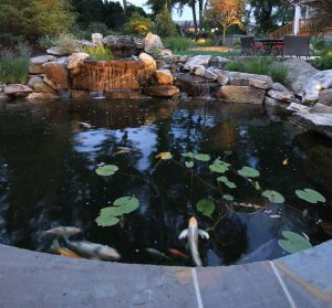 garden koi pond with lily pads