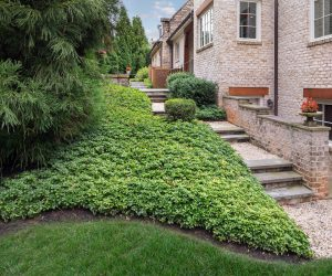 side yard ground cover and border plantings