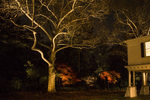 outdoor lighting tree branch structure & house