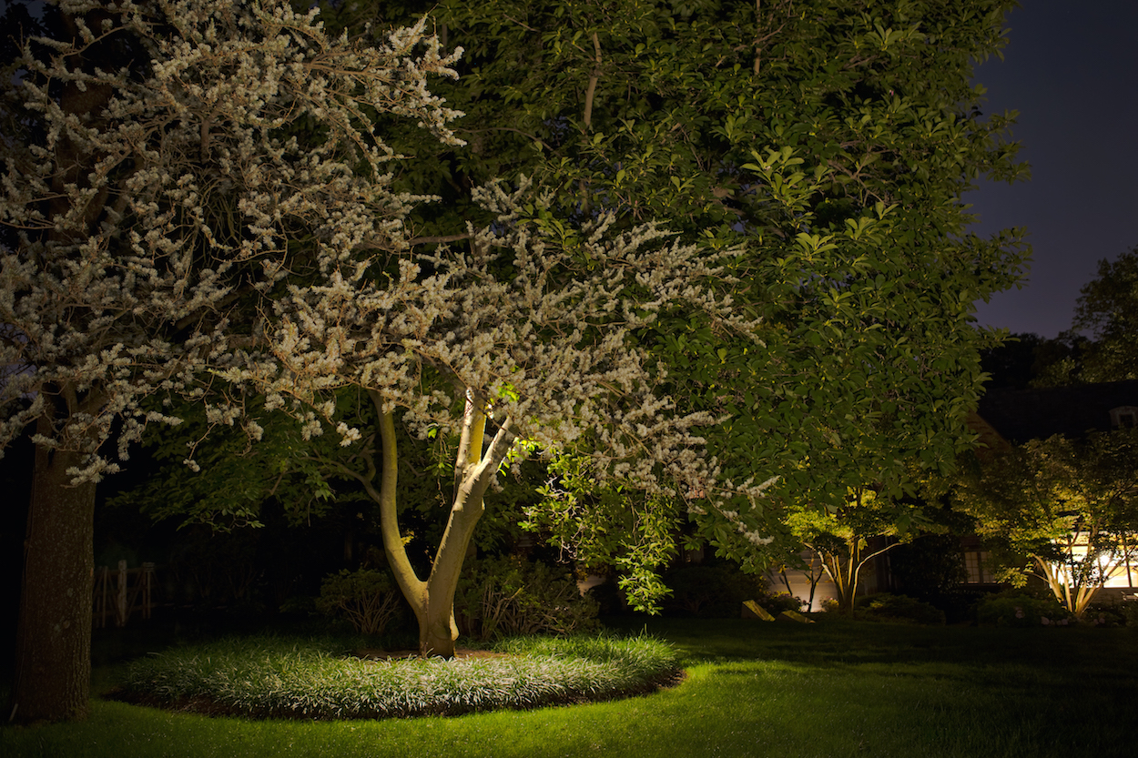 tree and bedding border with up lighting