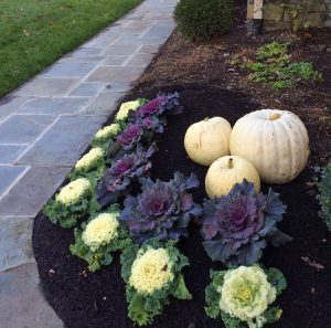 planting bed with white-pumpkins-ornamental-cabbage