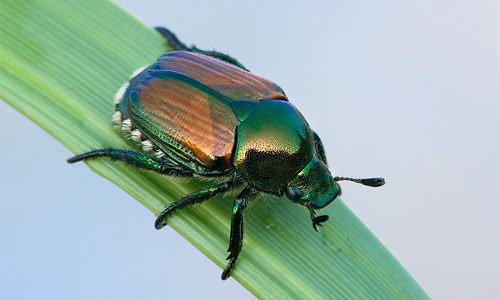 Northern Virginia Garden Insect Pests: Knowing Friend From