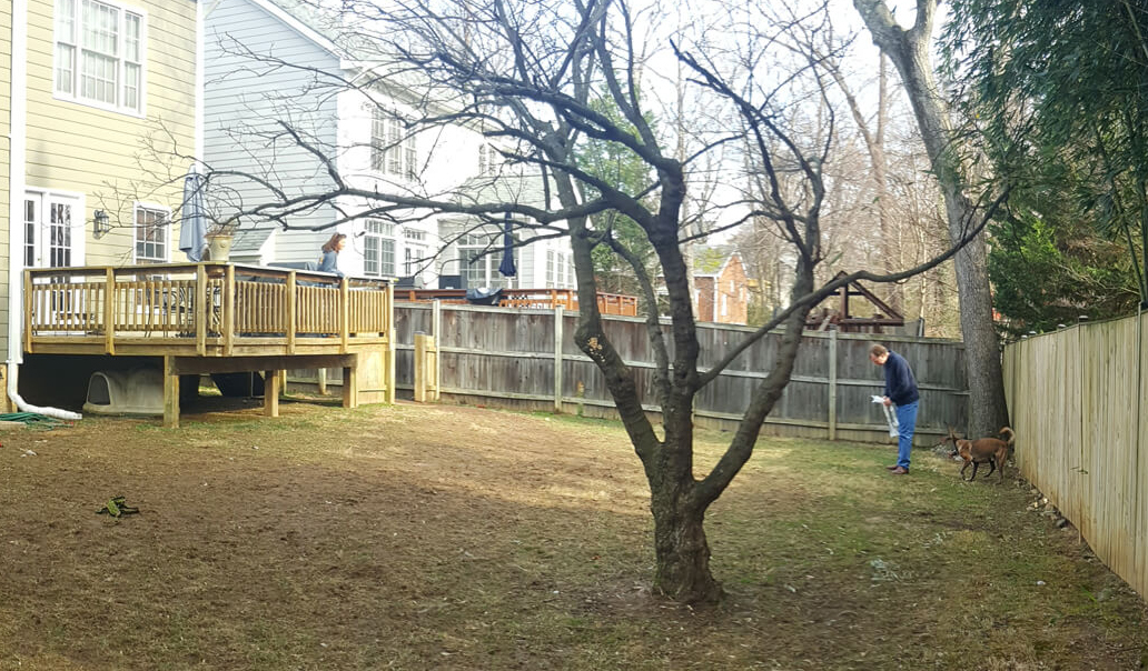 backyard BEFORE landscaping