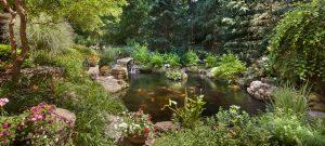 backyard fish pond with koi