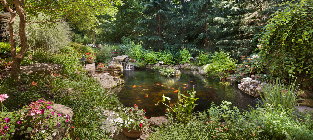 backyard fish pond with koi