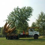 large shade tree on tree spade truck