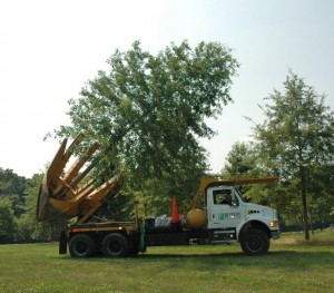 large shade tree on tree spade truck