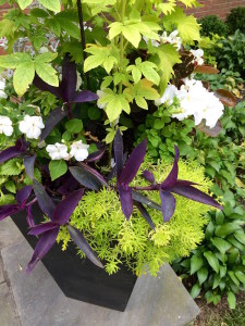 annual plant and flower arrangement in garden container