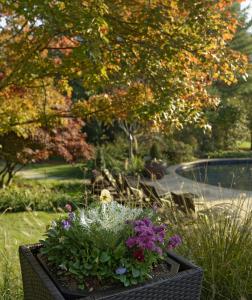 fall care care poolside scene