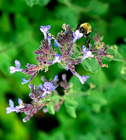 bee-pollinating-purple-flower