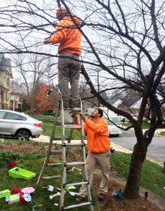 fine gardeners pruning technique