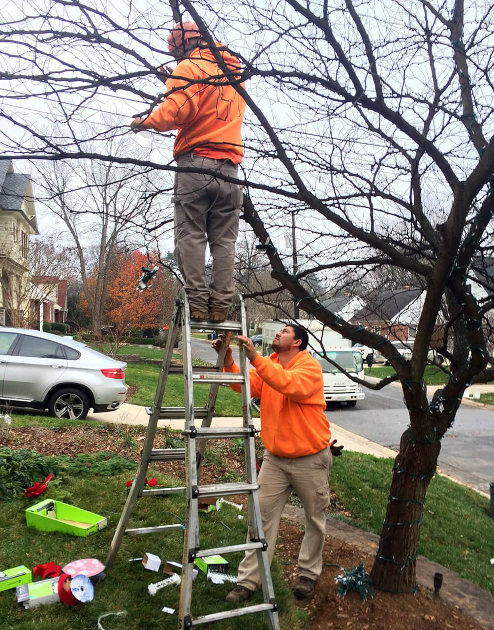 fine gardeners pruning technique
