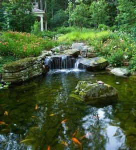 Koi pond with waterfall