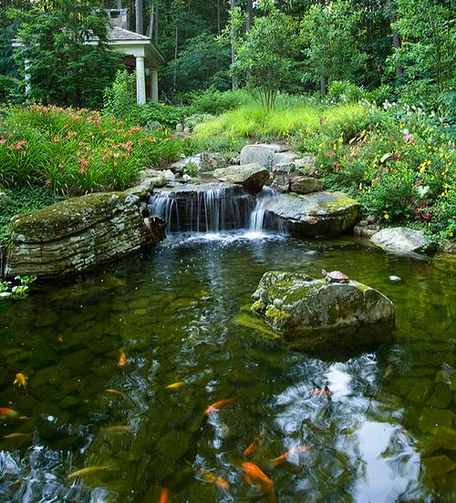 Koi pond with waterfall