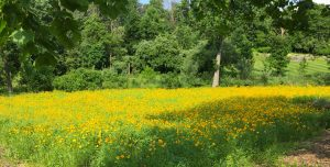 perennial flowering meadow plot