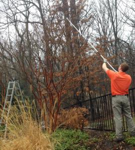 spring garden care tree pruning