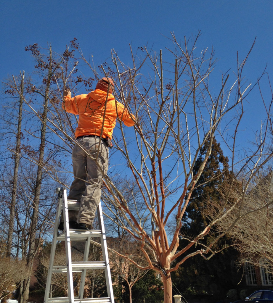 artistic tree pruning in spring garden maintenance